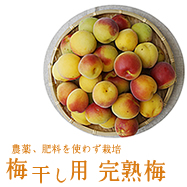 For pickled plum