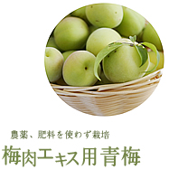 For plum extract
