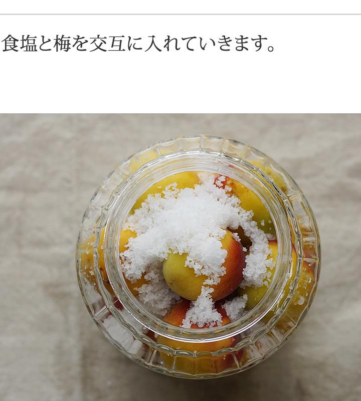 食塩と梅を交互にいれていきます。